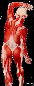 intro-body-D6